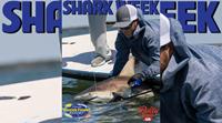 2021 Florida Insider Fishing Report Episode 20 – Shark